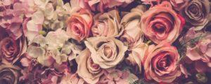 boite-roses-stabilisées