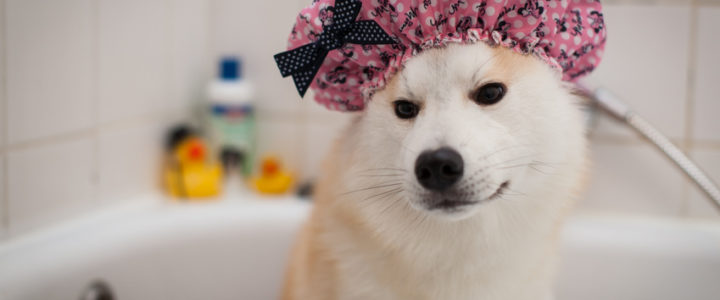 Tout savoir sur le toilettage pour chien